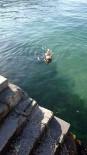 KÖPEK - Sıcaktan Bunalan Köpek Kendini Denize Attı