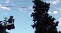 MUSTAFA DEMIR - 3 Gün Mahsur Kaldığı Ağaçtan 3 Saniyede İnerek Kaçtı