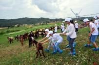 ORGANIK TARıM - Adana'da Çocuklar Tarımla Buluştu