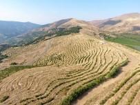ÇALDAĞ - İzmir'de Uygulanan Erozyon Kontrol Projesi Meyvesini Vermeye Başladı