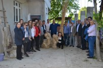 BOSTANCı - 'Kenevir Yetiştiriciliği' Anlatıldı