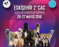 KÖPEK - Köpek Irkları Eskişehir'de Yarışacak