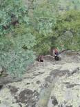 KÖPEK - Tosya'da Kayalıklarda Mahsur Kalan Köpek, AFAD Ekiplerince Kurtarıldı