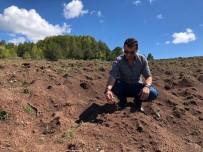 KAZANCı - Dünyada 'Kara Elmas' Olarak Bilinen Trüf Mantarı Giresun'da Da Yetiştirilecek