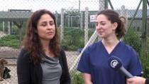 HAYVAN SEVGİSİ - Sokak Hayvanları İçin Fransa'dan Sinop'a Geldi