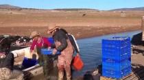 'Avrupalılar, Gümüş Balığını Çerez Olarak Tüketiyor'
