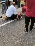 'Kaplumbağa Ölmesin' Diye Mücadele Verirken Kendisi Ölüyordu