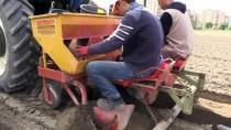 ALMANYA - Niğde'de Yerli Patates Tohumu Islah Çalışmaları