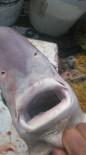 KÖPEK BALIĞI - İstavrit İçin Çıktıkları Balık Avında Köpekbalığı Yakaladılar