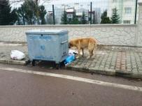 ÇÖP KONTEYNERİ - İzmit Belediyesi'nden Temiz Çevre Uyarısı