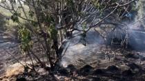 KURUDERE - Aydın'da Orman Yangını