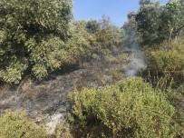 ORMANA - Aydın'da Yangın