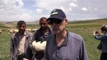 DOĞUŞ HOLDING - Bafra Koyunları Yetiştiricileri Sevindirdi