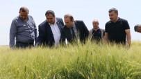 İL TARIM MÜDÜRLÜĞÜ - Ekili Arazilerde Süneyle Mücadele Çalışmaları Başladı