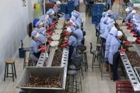 ÇEK CUMHURIYETI - (Özel) Zonguldak'tan Avrupa'ya Yılda Bin 200 Ton Salyangoz İhraç Ediyorlar