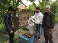 EMEKLİ MEMUR - Ağacın Dalına Oğul Yapan Arılar Kovana Yerleştirildi