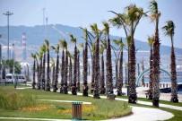 ZEYTINLI - Aliağa Sahilindeki Palmiye Ve Yeşil Örgü Tamamlandı