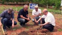 ENDEMIK - Bahçede Yetiştirilen 'Yabani Orkide'nin Hasadı Yapıldı