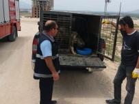 Girdiği Menfezde Mahsur Kalan Yaralı Köpeği İtfaiye Kurtardı