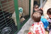 HAYVAN SEVGİSİ - Minik Öğrencilere Hayvan Sevgisi Aşılandı