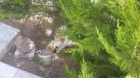 FOSEPTİK ÇUKURU - Yavrusu Foseptik Borusuna Düşen Anne Kedinin Çaresizliği Yürek Sızlattı