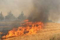 KARAKURT - Anız Yangını Ormana Sıçradı
