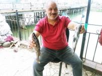 BALIK TÜRÜ - Balıkçıların Ağına Taş Balığı Olarak Bilinen Ekşina Takıldı