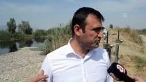 MENDERES NEHRİ - GÜNCELLEME - Aydın'da Toplu Balık Ölümleri