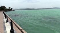 EGE DENIZI - Köyceğiz Gölü'nün Rengi Değişti