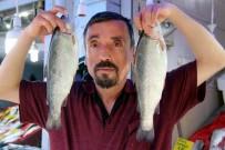 NORVEÇ - Ramazan, Balıkçıların Da Yüzünü Güldürdü