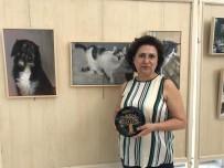 HAYVAN HAKLARı FEDERASYONU - Sokak Hayvanları İçin Sanat Sergisi