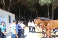 ORHAN TAVLı - Vali Tavlı, Kabatepe Jandarma Karakolunu İnceledi