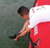 MAHSUR KALDI - Yavru Yunus Balığını Kurtarma Operasyonu