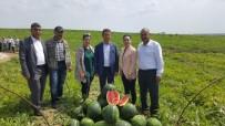 MEHMET AKıN - YZO Başkanı Mehmet Akın Doğan Açıklaması 'Karpuz İhracatı Çiftçinin Yüzünü Güldürdü'