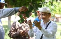 İLAÇ KULLANIMI - Mersin'de Doğayı Uğur Böcekleri Koruyacak