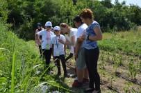 ÖĞRETIM GÖREVLISI - Aydınlı Çocuklar Tarımla Tanıştı