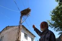 ELEKTRİK DİREĞİ - Göçmen Leylekler Köy Sakini Gibi