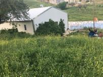 Kulplu Genç Çiftçi İlk Hasadını Yaptı