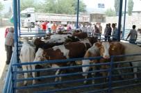 EREN ARSLAN - Milas'ta 8 Genç Çiftçiye 48 Büyükbaş Hayvan Verildi