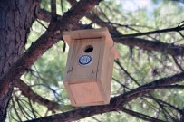SIĞIRCIK - Muğla'nın Kuşlarına Büyükşehir Güvencesi