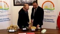 Yerli Patates 'Nahita' Yurt Dışına Açılıyor