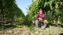 SUBAŞı - Manisa'daki Dolu Yağışı Üzüm Bağlarına Zarar Verdi