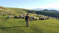 SAHUR - Ramazan'ı Yaylada Koyunları İle Geçiriyorlar