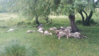 İSMAIL KARAKUYU - Simav'da Yıldırım Düşmesi Sonucu 23 Küçükbaş Hayvan Telef Oldu