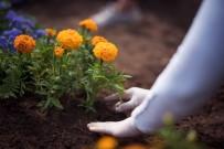 EKINEZYA - Tepebaşı Çiçek Açıyor