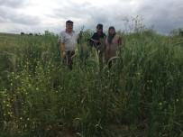 TARIM SİGORTASI - Büyükşehir'in Tohum Desteği İle Verim Arttı