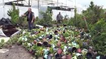 KOCADERE - Yalova'daki Seralar Şiddetli Sağanaktan Zarar Gördü