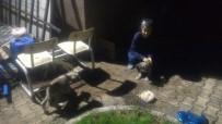 HAYVAN - Yolda Bulduğu Yavru Köpekleri İtfaiye Müdürlüğüne Bıraktı