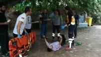 Dut Ağacından Düşen Şahıs Yaralandı