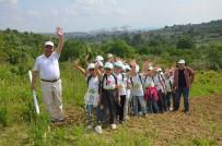 KÜLTÜR MANTARı - İlkokul Öğrencileri Tarım Ürünlerini Tarlada İnceledi